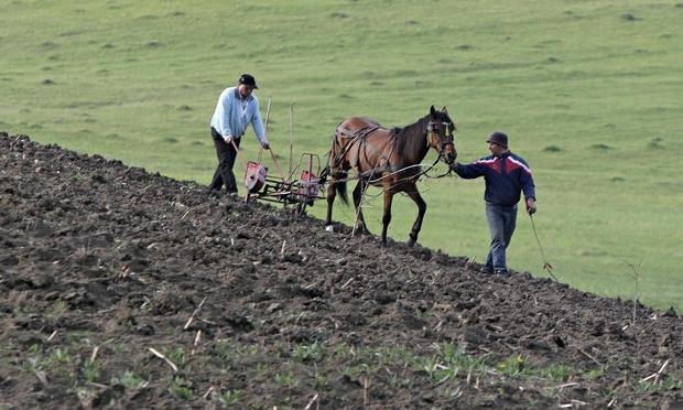 Порядок приватизации земельного участка в садовом товариществе: как это сделать