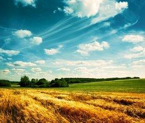 Как оцениваются земли сельхозназначения: пошаговая инструкция