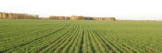 Виды разрешенного использования земельного участка: классификатор, какие бывают, условные
